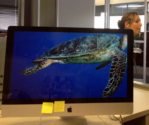 Coworkers-Add-their-Heads-to-Animals-on-Desktop Backgrounds (28)