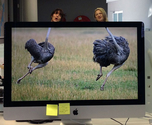 Coworkers-Add-their-Heads-to-Animals-on-Desktop Backgrounds (29)