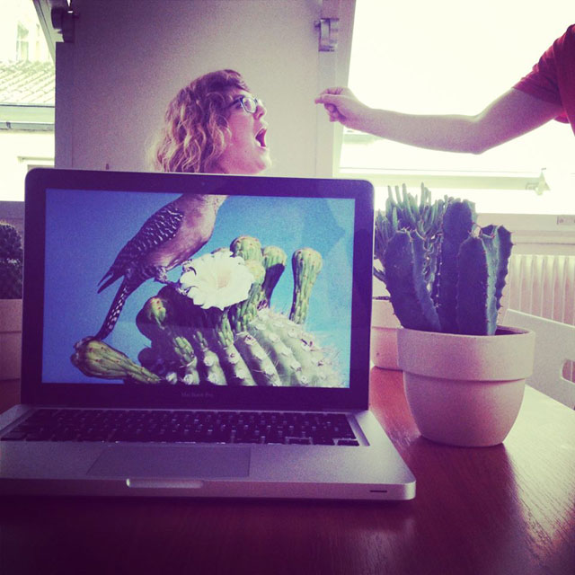 Coworkers-Add-their-Heads-to-Animals-on-Desktop Backgrounds (9)