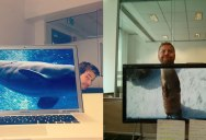 These Coworkers are Adding their Heads to Animals on Each Other's Desktop Backgrounds