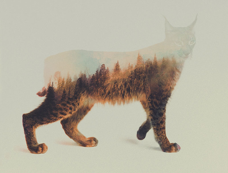 double exposure animal portraits by andreas lie (10)
