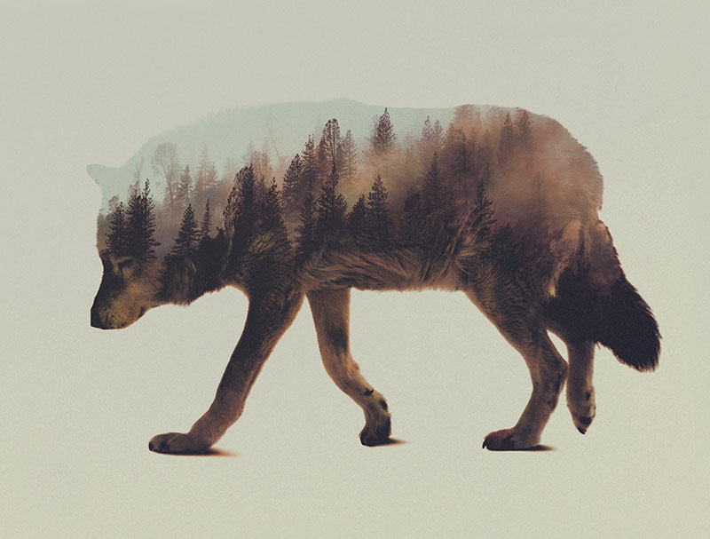 double exposure animal portraits by andreas lie (11)