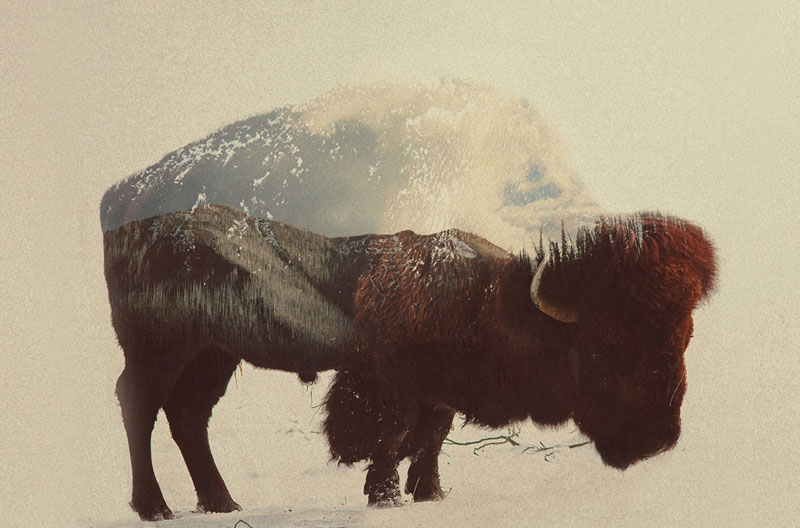 double exposure animal portraits by andreas lie (2)