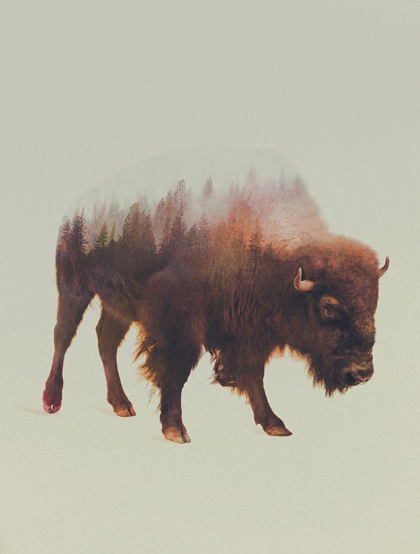 double exposure animal portraits by andreas lie (8)