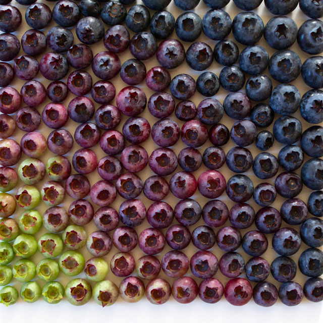 food gradients by brittany wright (2)