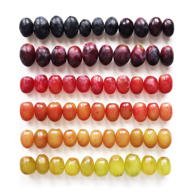 food gradients by brittany wright (4)