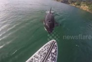 Watch a Killer Whale Swim Right Underneath this Paddleboarder