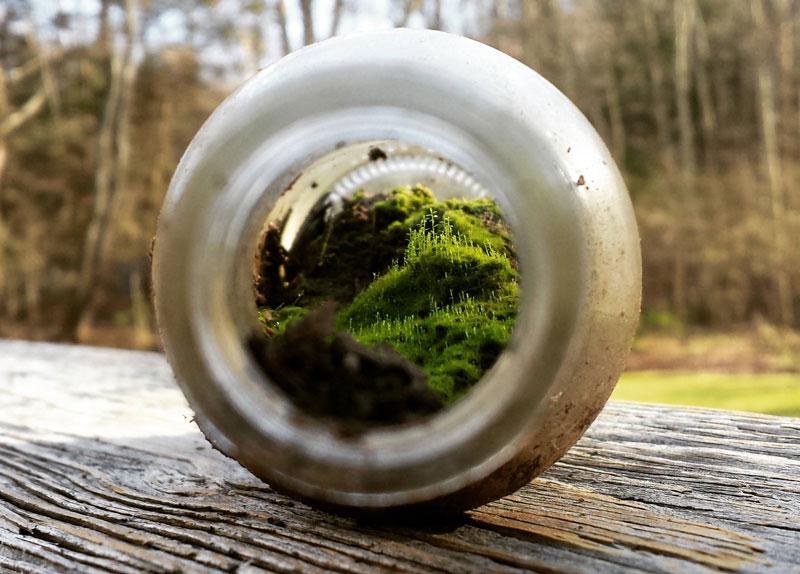 miniature terrarium world inside a bottle cover Picture of the Day: A Miniature World Inside a Bottle