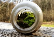 Picture of the Day: A Miniature World Inside a Bottle