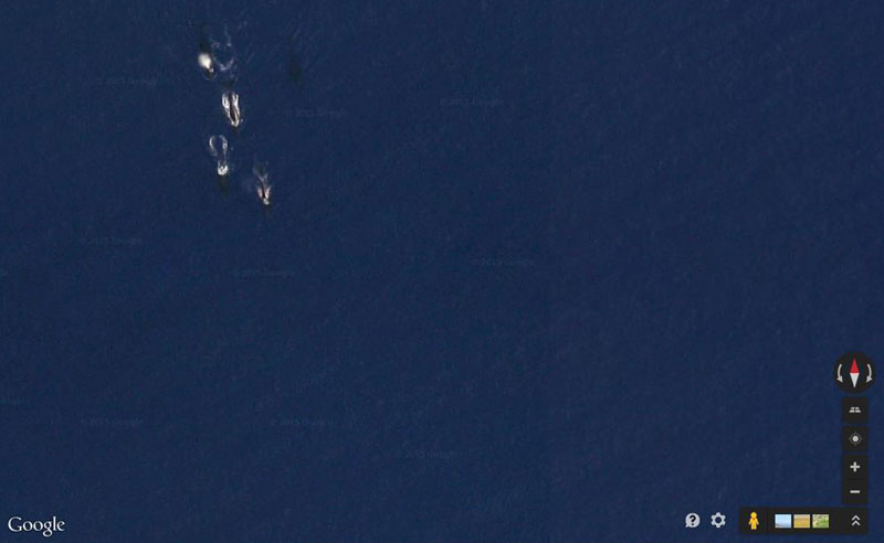 Picture of the Day: Pod of Whales on Google Maps