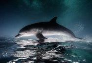 16 Breathtaking Underwater Animal Photos by Jorge Hauser