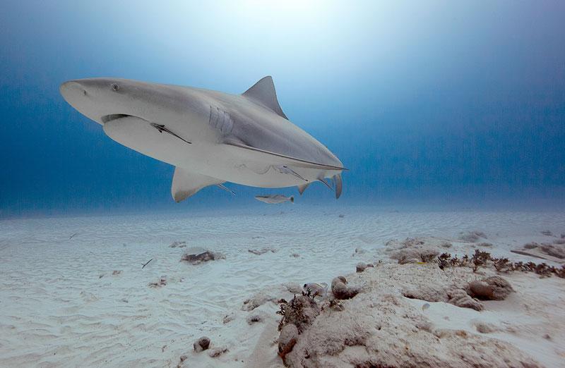 Underwater Animal Photography by Jorge Cervera Hauser (16)