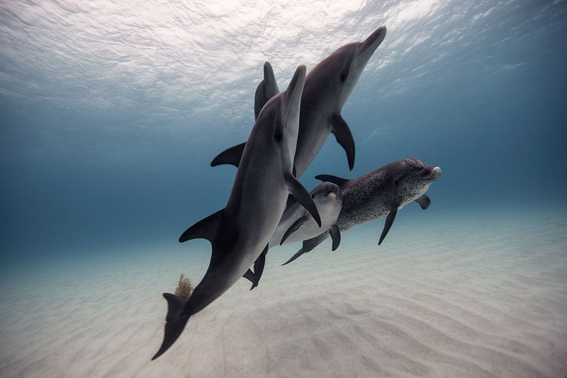 Underwater Animal Photography by Jorge Cervera Hauser (2)