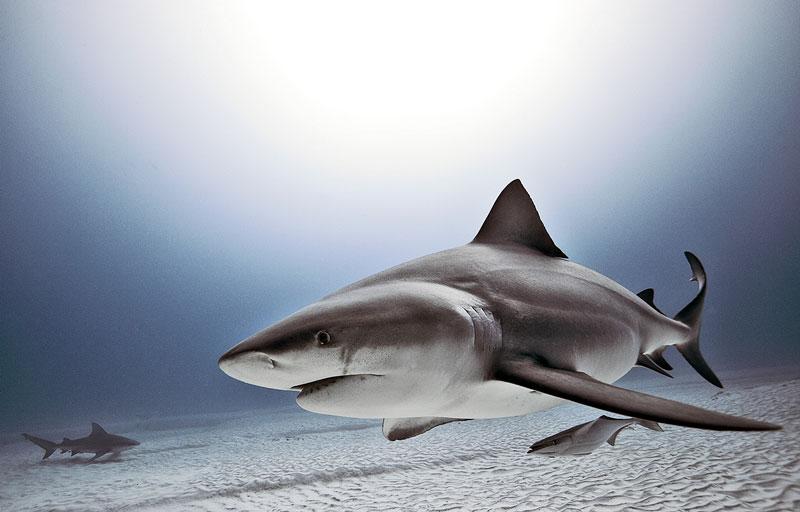 Underwater Animal Photography by Jorge Cervera Hauser (5)