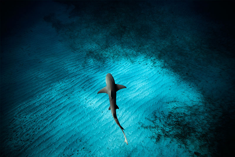 Underwater Animal Photography by Jorge Cervera Hauser (8)