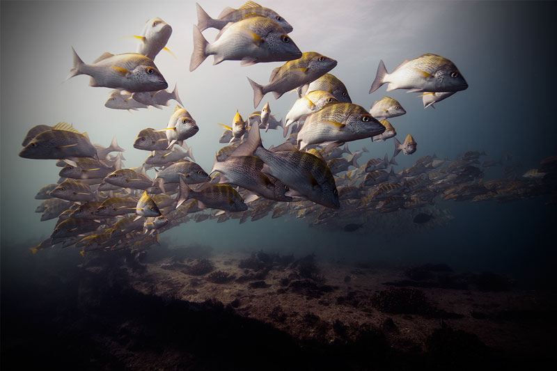 Underwater Animal Photography by Jorge Cervera Hauser (9)