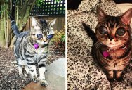 This Cat has the Biggest Eyes I Have Ever Seen (11 Photos)