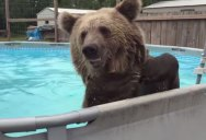 Swim Time at this Animal Sanctuary is the Best