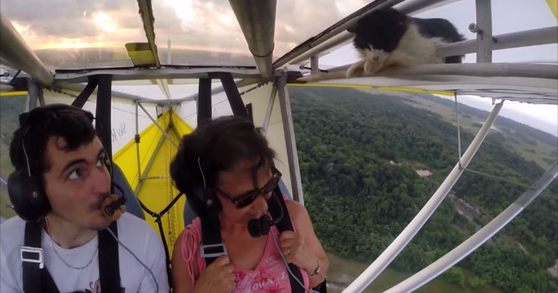 Chill Cat Sneaks Onto Wing of Glider Plane After Pilot's Pre-Flight Check