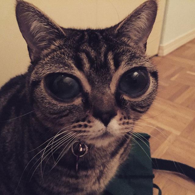 cat with huge eyes alien cat matilda (13)