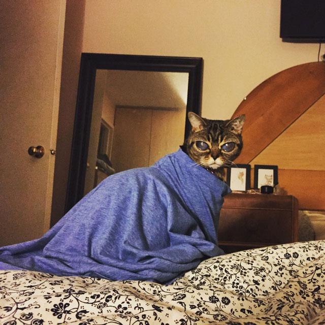 cat with huge eyes alien cat matilda (14)