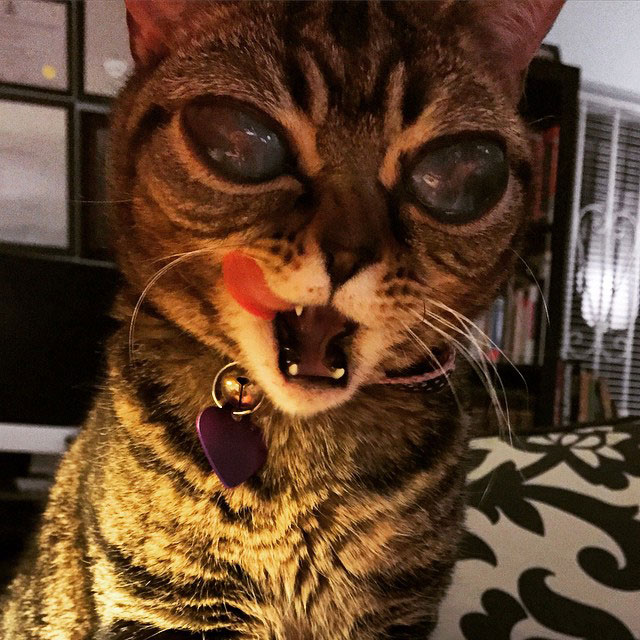 cat with huge eyes alien cat matilda (5)