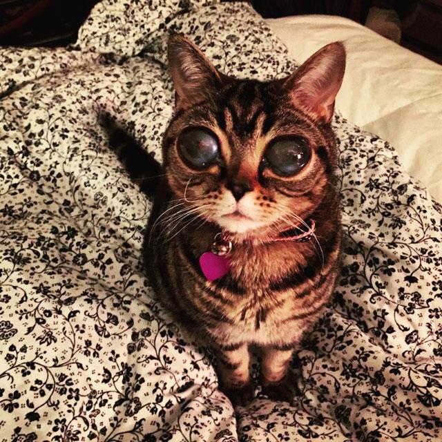 cat with huge eyes alien cat matilda (9)