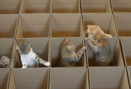 9 Cats, 20 Boxes