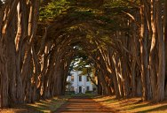 Picture of the Day: Cypress Tree Avenue – Point Reyes, California