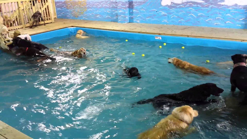 This Doggy Day Care Has an Awesome Pool Party Every Day