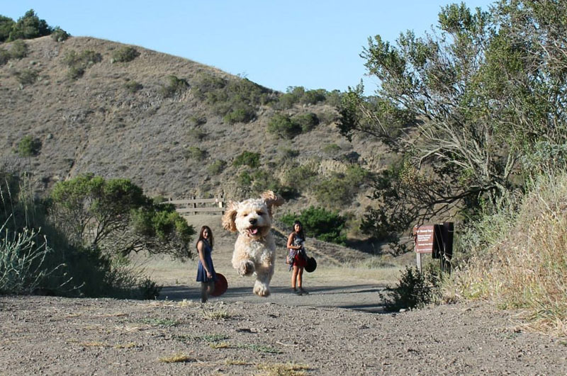 Picture of the Day: Forced Perspective or World's Biggest Dog?