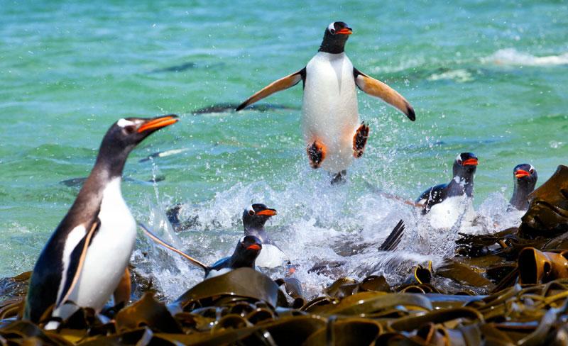 i-believe-i-can-fly-penguin-Ashley Neuhof