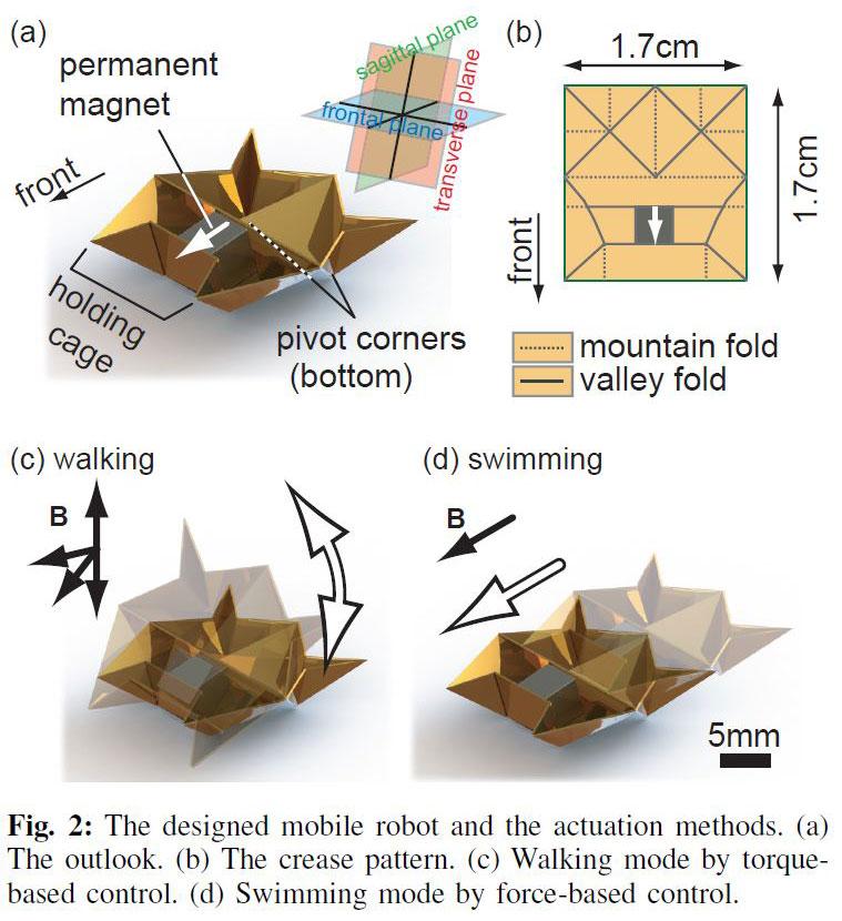 Tiny Self-Folding Origami Robot Can Walk Swim and Degrade (1)