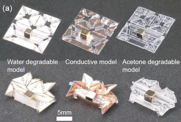 Tiny Self-Folding Origami Robot Can Walk Swim and Degrade (5)