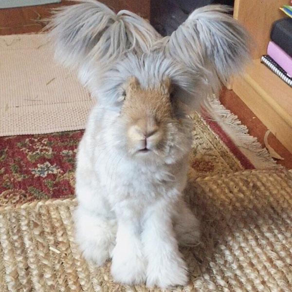 wally the bunny rabbit instagram best ears ever (1)