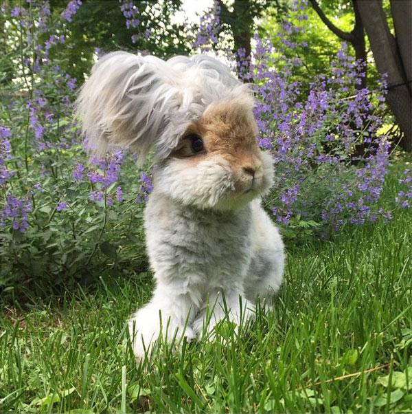 wally the bunny rabbit instagram best ears ever (3)