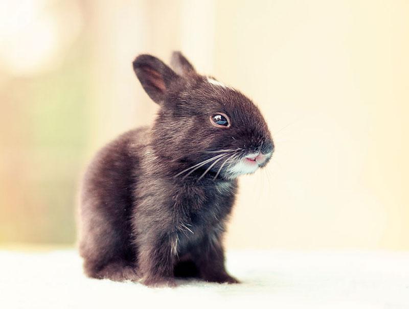 ashraful arefin captures first 30 days of bunnys life (5)