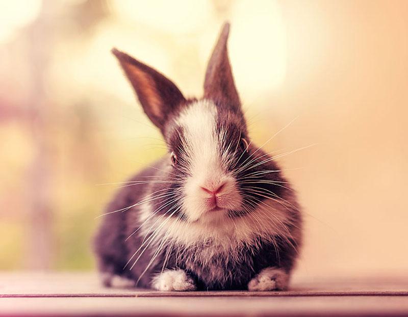 ashraful arefin captures first 30 days of bunnys life (6)