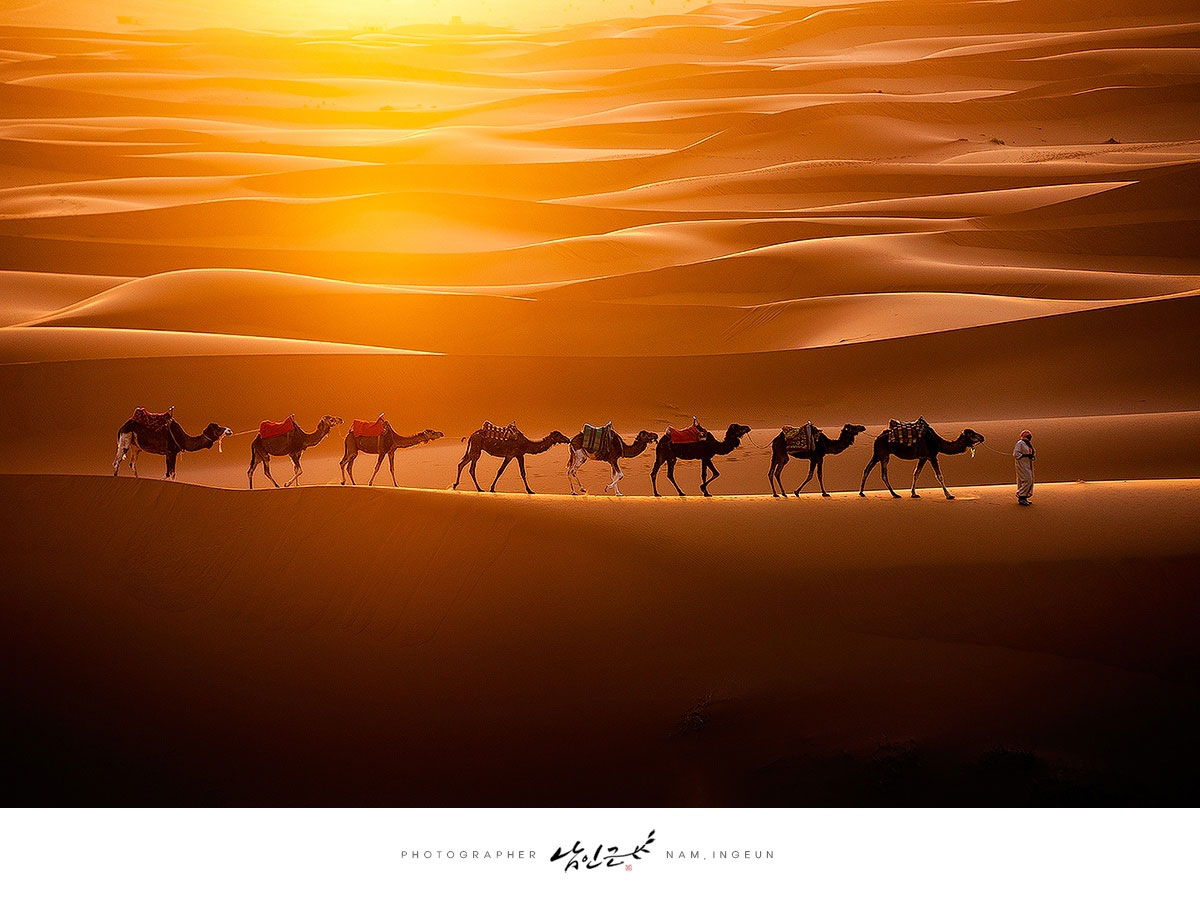 camels across the sahara The Top 100 Pictures of the Day for 2015