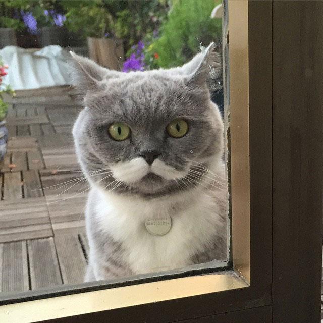 citronnelle the cat instagram (3)