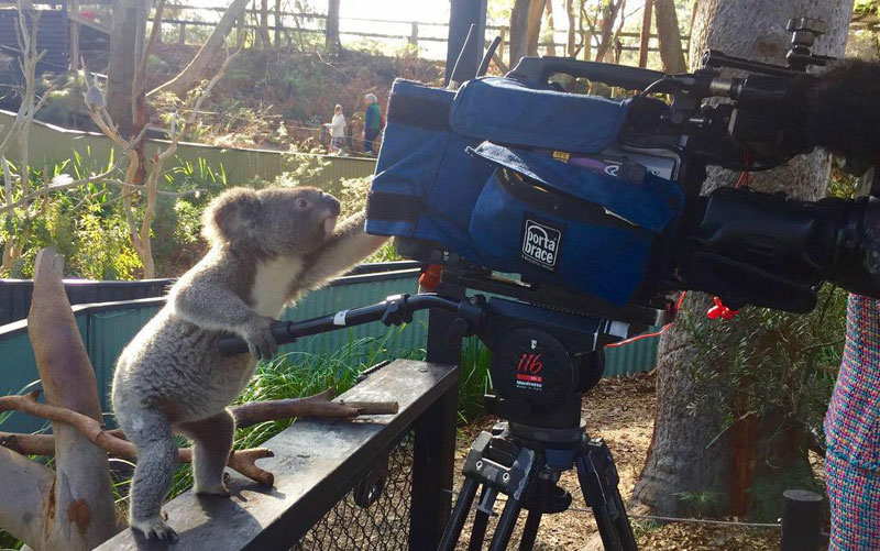 koala camera The Shirk Report   Volume 324