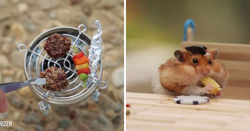Tiny Hamster Has Tiny Fourth of July BBQ