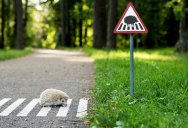 Tiny Road Signs Remind City Residents Animals Live There Too