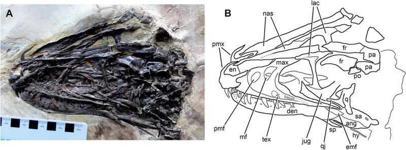 winged dinosaur ancestor to velociraptor found perfectly preserved (2)