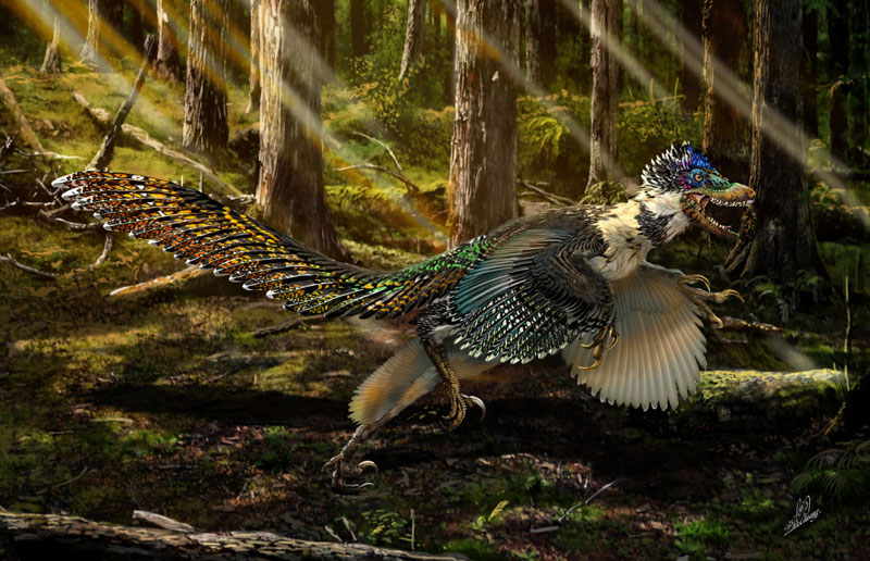 winged dinosaur ancestor to velociraptor found perfectly preserved (5)