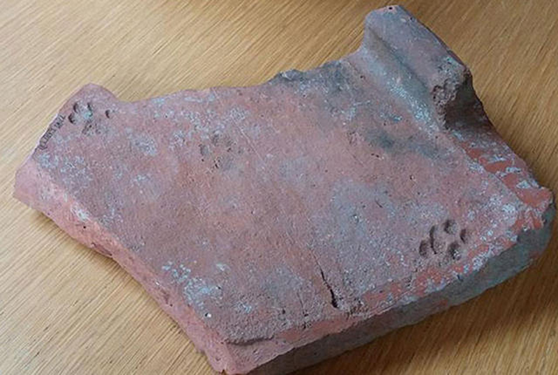 2000 year old cat paw print on roof tile gloucester city museum 2000 Year Old Paw Print Shows Cats Have Never Cared