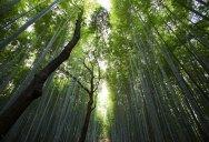 Picture of the Day: Arashiyama Bamboo Grove, Kyoto, Japan