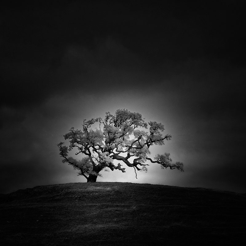 california trees infrared photography by nathan wirth  (3)