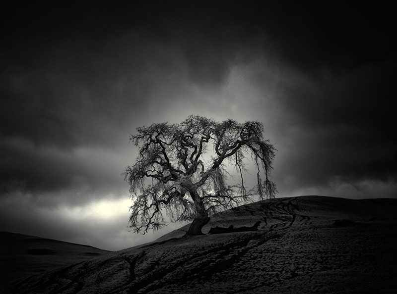 california trees infrared photography by nathan wirth  (6)
