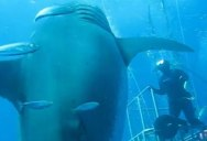 This New Footage of 'Deep Blue' Will Give You Chills
